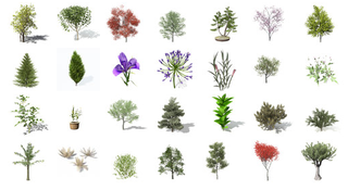 Download 130 Free Foliage items for 3ds Max from Xfrog Inc - Jamie's