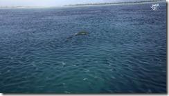 Jellyfish_plesiosaur_opensea